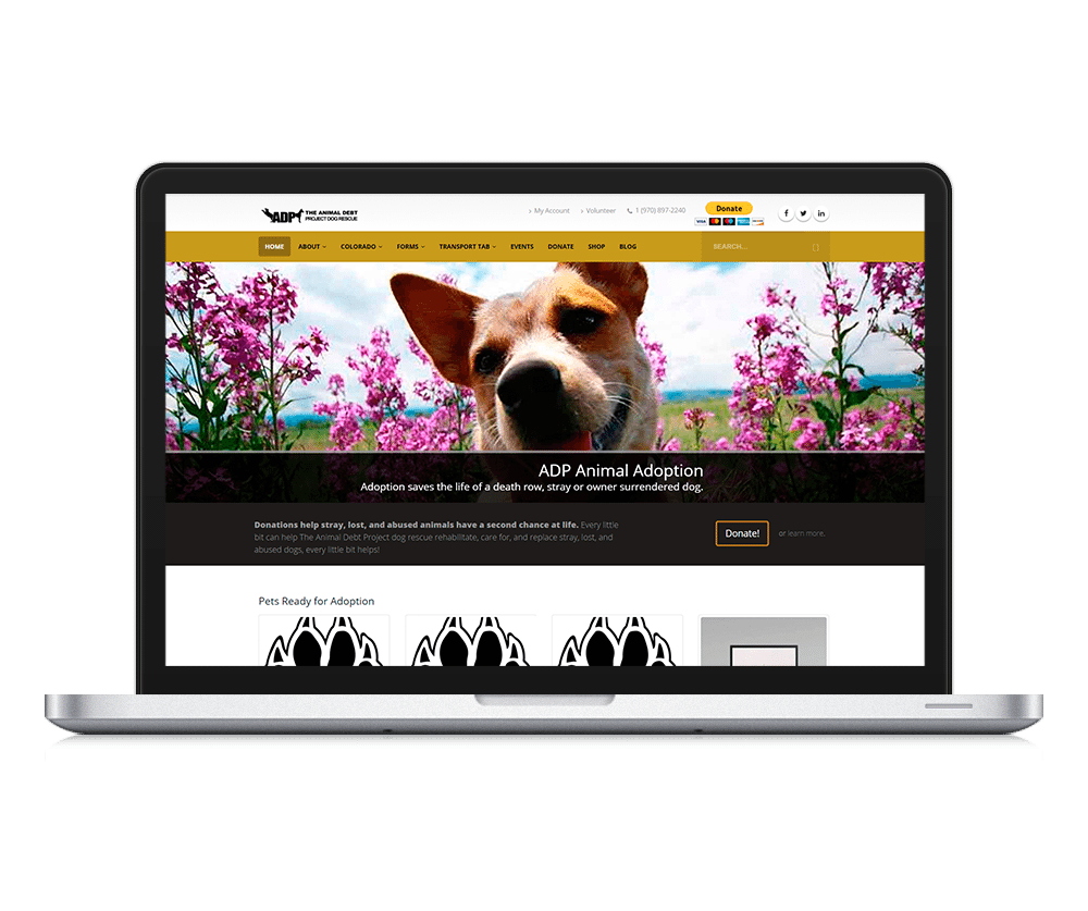 fort collins wordpress design for The Animal Debt Project