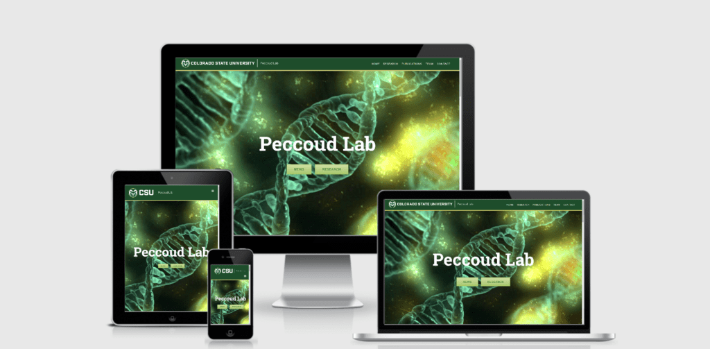 fort collins wordpress redesign for CSU peccoud labs by lifebloomcreative.com